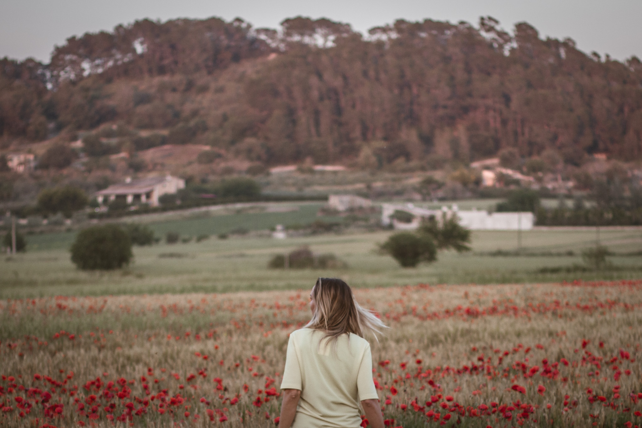 Endless poppy fields
